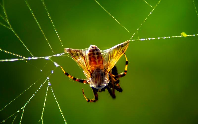 Spiders-Arachnids-032.jpg