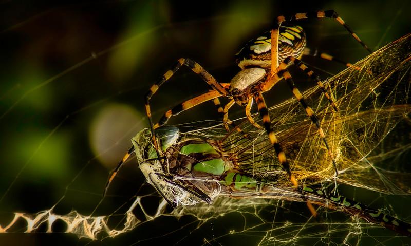 Spiders-Arachnids-021.jpg