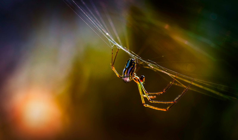 Spiders-Arachnids-090.jpg