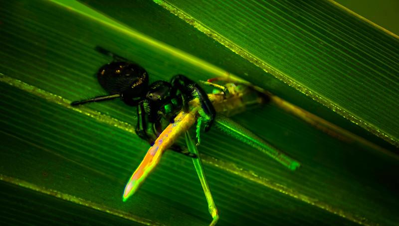 Spiders-Arachnids-029.jpg
