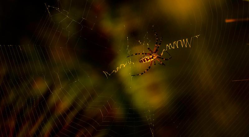 Spiders-Arachnids-130.jpg