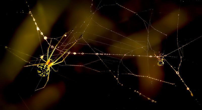 Spiders-Arachnids-095.jpg