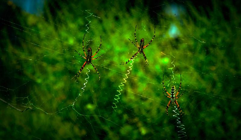 Spiders-Arachnids-039.jpg