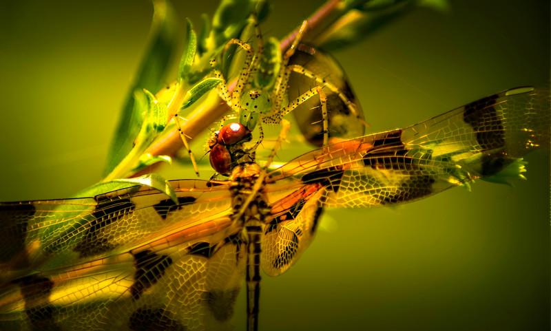 Spiders-Arachnids-009.jpg