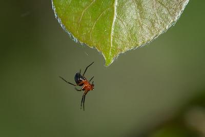 Spider aerobics