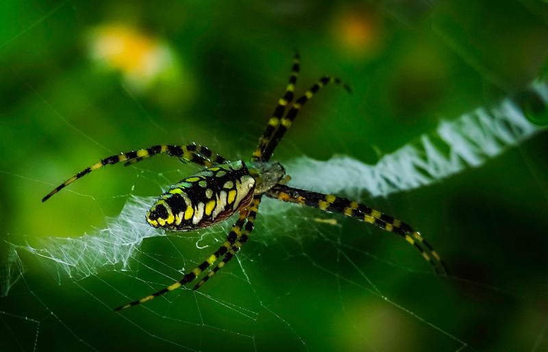 Spiders-Arachnids-092.jpg