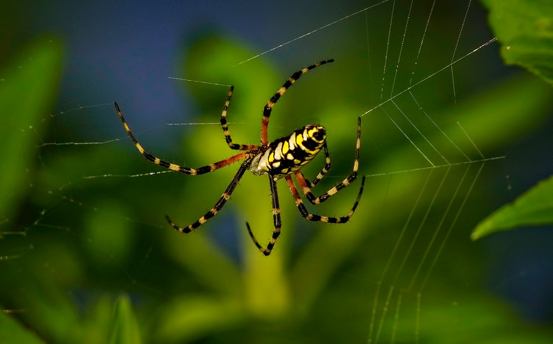 Spiders-Arachnids-129.jpg