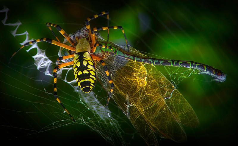 Spiders-Arachnids-011.jpg