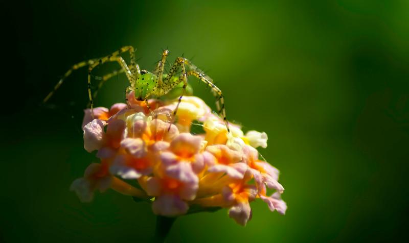Spiders-Arachnids-068.jpg