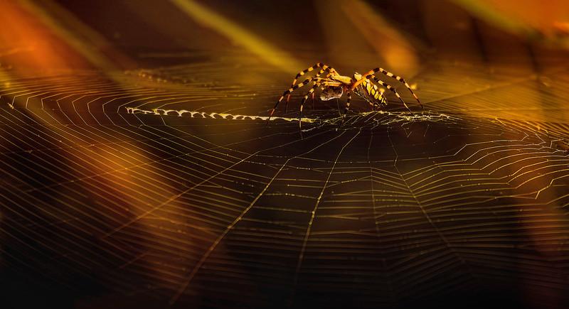 Spiders-Arachnids-178.jpg
