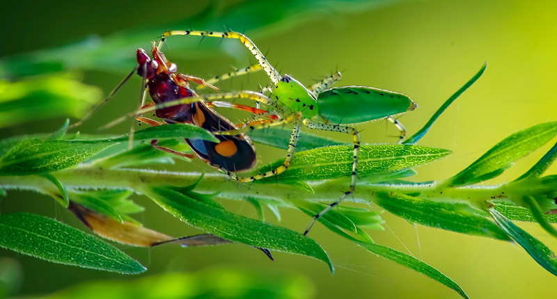 Spiders-Arachnids-065.jpg