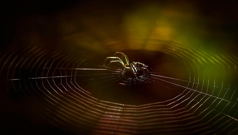 Spiders-Arachnids-103.jpg