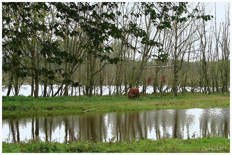 Natuurgebied Broekpolder