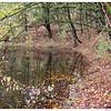 Natuurgebied Delftse Hout