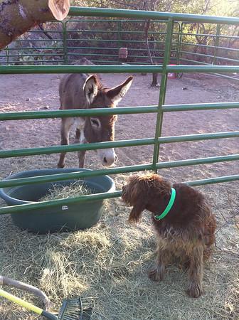 neighbor's donkey