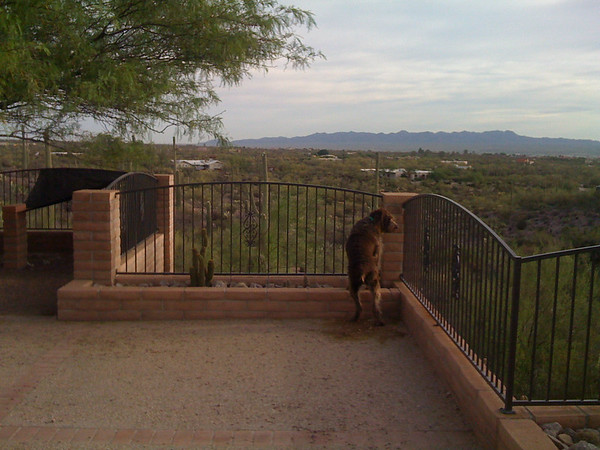 patrolling the property