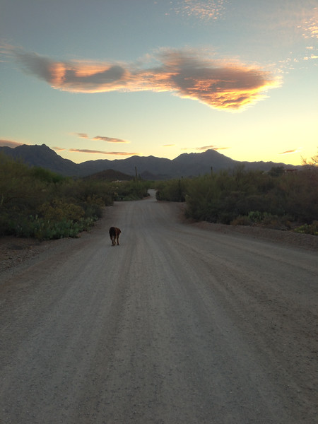 The last picture, into the sunset. Evening walk the night before Fringe died.