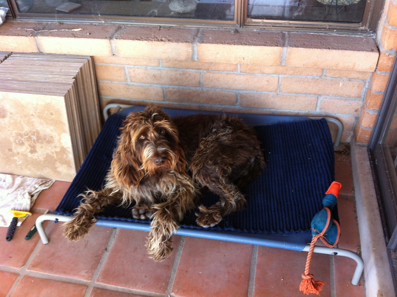 chilling on the dog cot