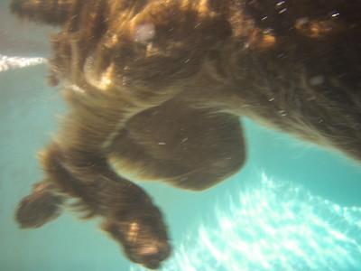 Fringe in Pool