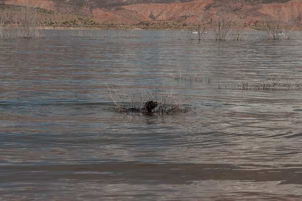Fringe - Roosevelt Lake - AZ - USA - ©2006 Margy Green