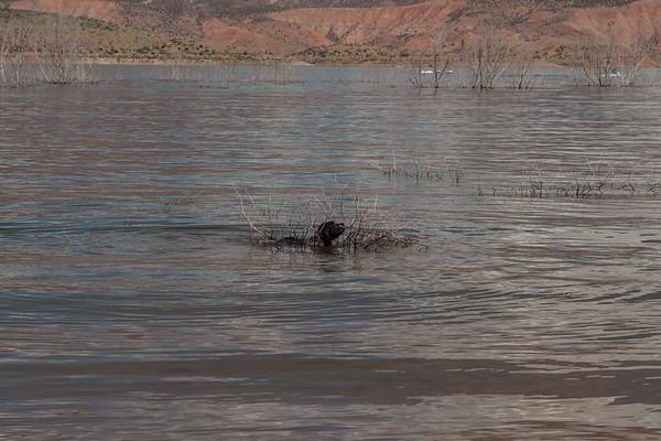 Fringe - Roosevelt Lake - AZ - USA - ©2006 Margy Green