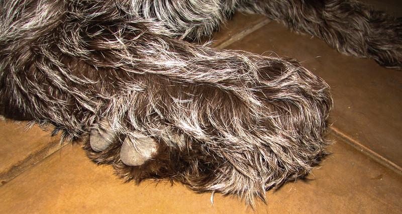 Fringe wrist - Tucson - AZ - USA - ©2006 Margy Green