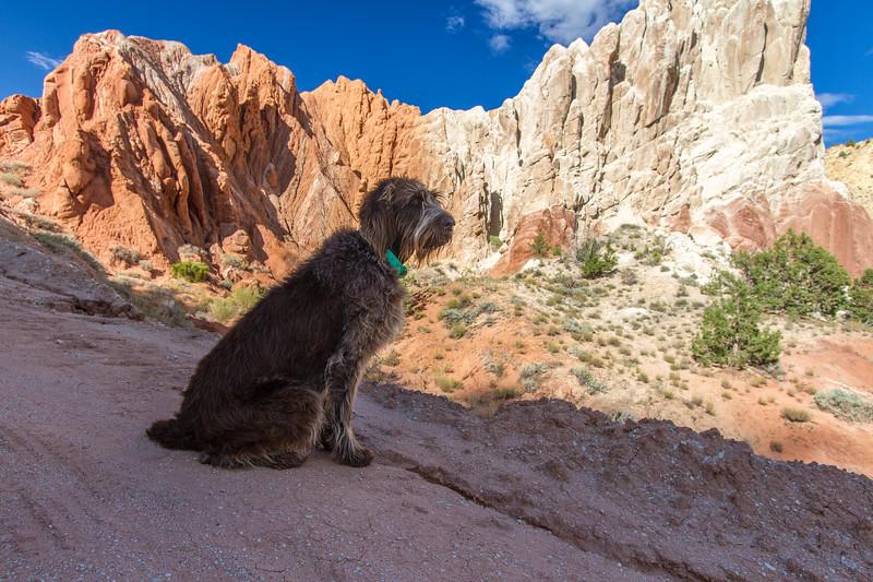 Fringe. Red Canyon. Utah USA