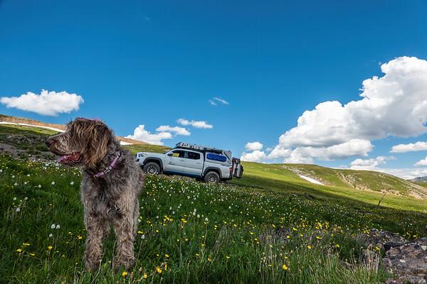 Jaypeg, Engineer Pass, Lake City to Ouray, Colorado USA