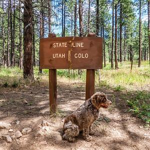 Jaypeg, spinone itlaiano. Utah Colorado border, Rim Rocker Trail, USA