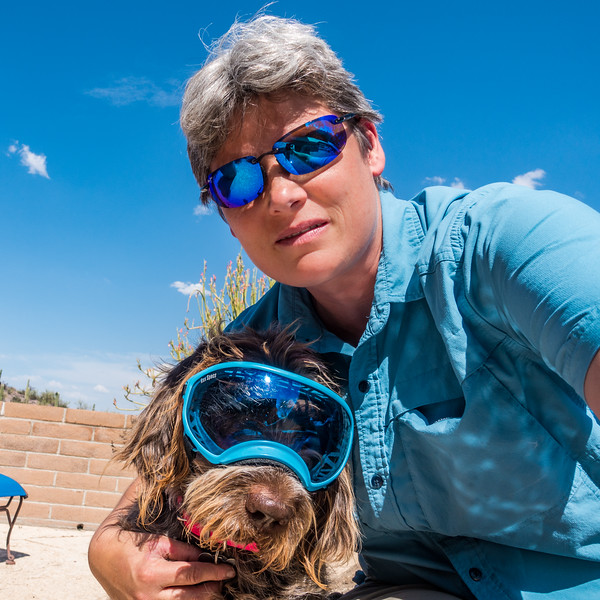 Pixelated Jaypeg, Spinone italiano, and Margy sporting blue mirror shades. Rex Specs and Maui Jim. Tucson, Arizona