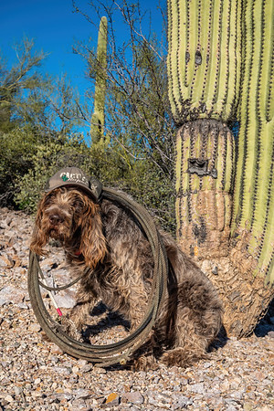 Pixelated Jaypeg, spinone italiano. Cactus Ropes and a lasso. Tucson, Arizona