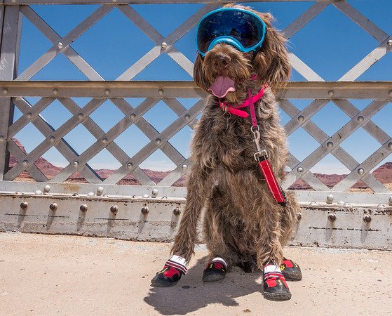 Jaypeg wearing paw and sun eye protection on the Lee's Ferry Bridge. Lee's Ferry, Marble Canyon, Coconino Co., Arizona USA