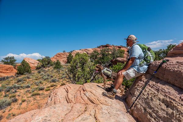Pixelated Jaypeg, spinone italiano. Paria Plateau, Vermilion Cliff National Monument, Coconino Co. Arizona USA