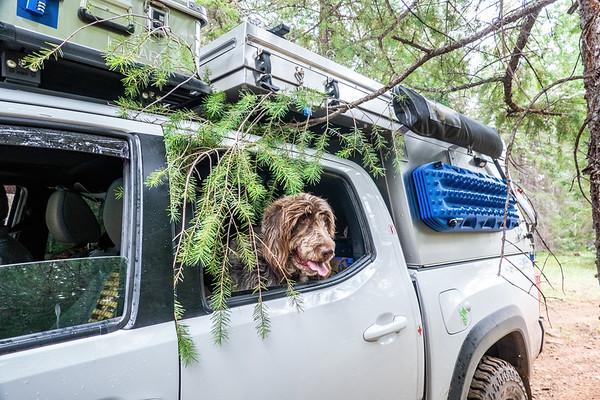 Jaypeg & Tacoma. Green's Peak Area, Apache-Sitgreaves national Forest, Arizona USA