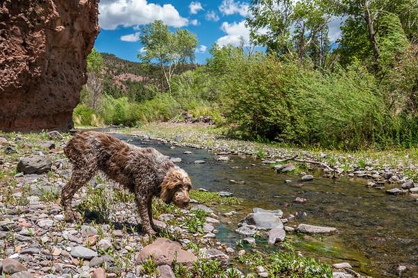 Pixelated Jaypeg, Spinone Italiano. Blue River, Blue Wilderness, Greenlee County, Arizona USA