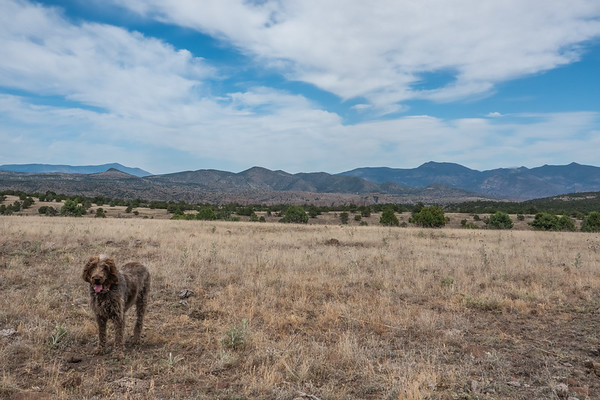 Four Bar Mesa Blue Wilderness Area, Arizona USA