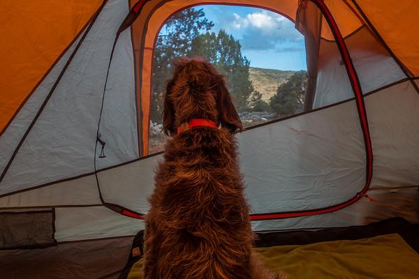 Pixelated Jaypeg (spinone italiano) morning in tent. Vermillion Cliffs, Arizona USA