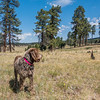 Pixelated Jaypeg. Apache National Forest, Apache Co., Arizona USA