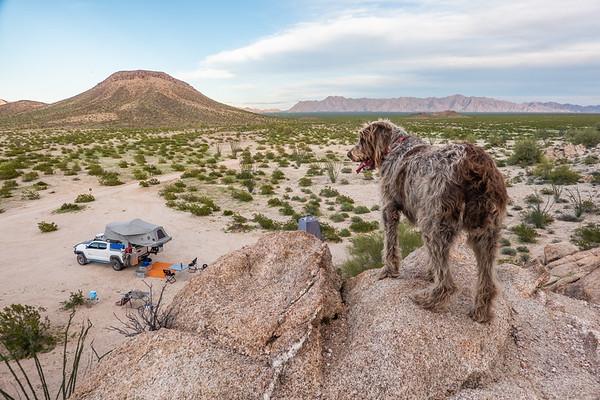 Pixelated Jaypeg, Spinone Italiano. Christmas Pass, Cabeza Prieta National Wildlife Refuge, Yuma County Arizona USA