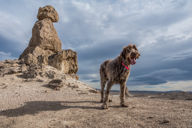 Pixelated Jaypeg, spinone italiano. Trona Pinnacles, San Bernadino Co. California USA