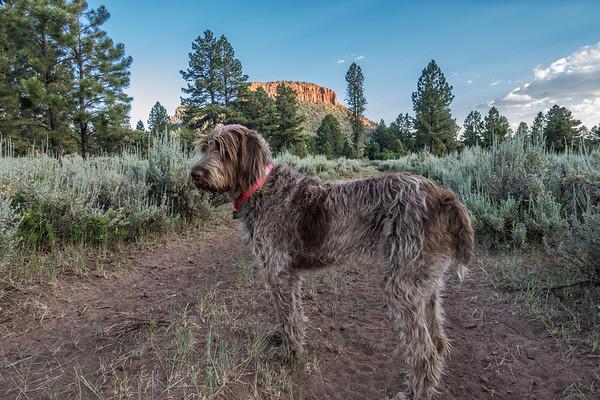 Pixelated Jaypeg, spinone italiano. Bears Ears, Bears Ears National Mounument, Manti La Sal National Forest, San Juan Co., Utah USA