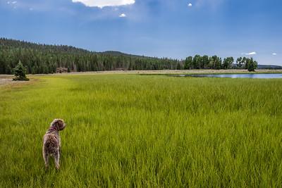 Row Lakes, GriffinTop, Garfield County Utah