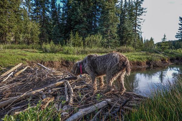 East Fork Creek of Sevier River, Dixie National Forest, Kane County, Utah USA