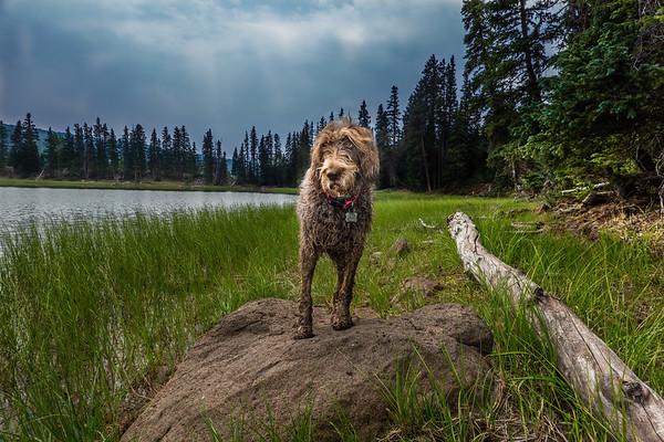 Row Lakes, Fishlake National Forest, GarfieldCounty, Utah USA