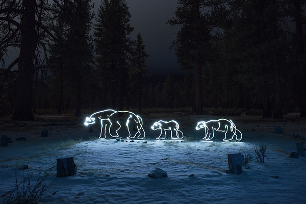 Polar Bear & Cubs