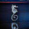 Seahorse