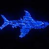 Great light shark