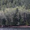 Great Bear Rainforest scenery