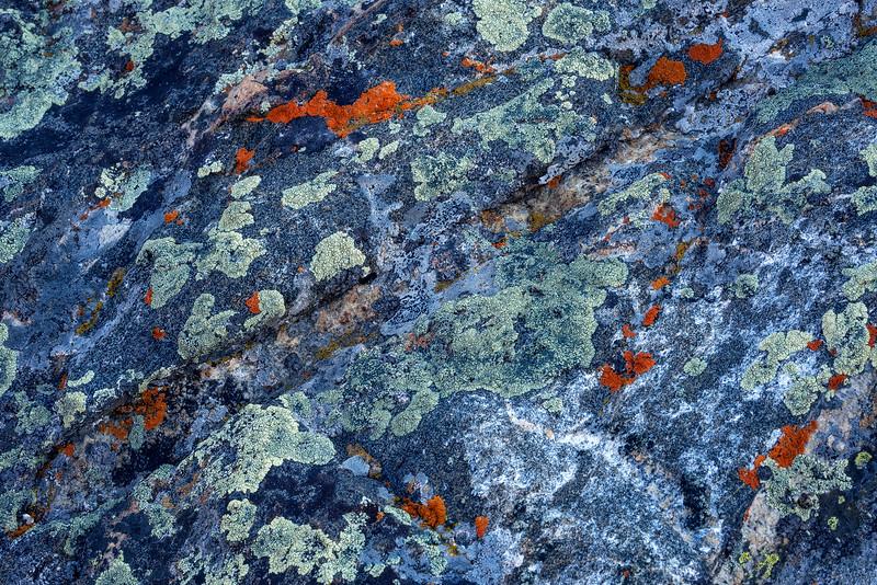 """""""Living Lichen"""""""