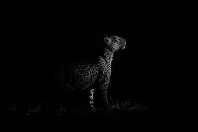 The Silent Huntress